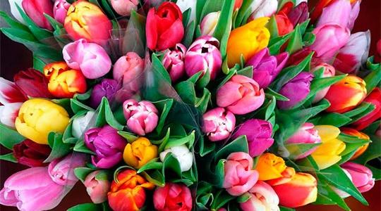 Тюльпаны к 8 марта 2017